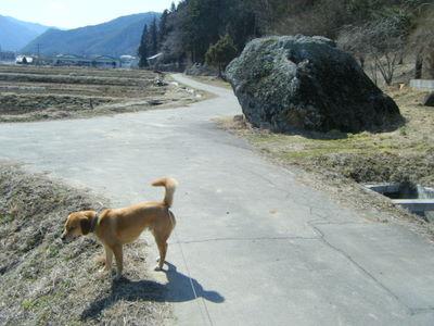 武石公園の外周の道
