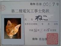 電気工事士免状ネコ