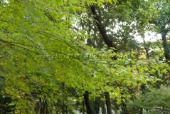 yusentei12.jpg
