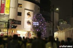 クロエのクリスマスツリー